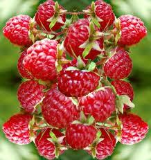 raspberry ketone,pure raspberry ketone